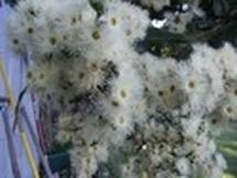 Fleurs du bout du monde- floraisons exotiques Cadagh10