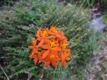 Fleurs du bout du monde- floraisons exotiques Epiden11