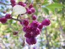 Fleurs du bout du monde- floraisons exotiques Fruits10