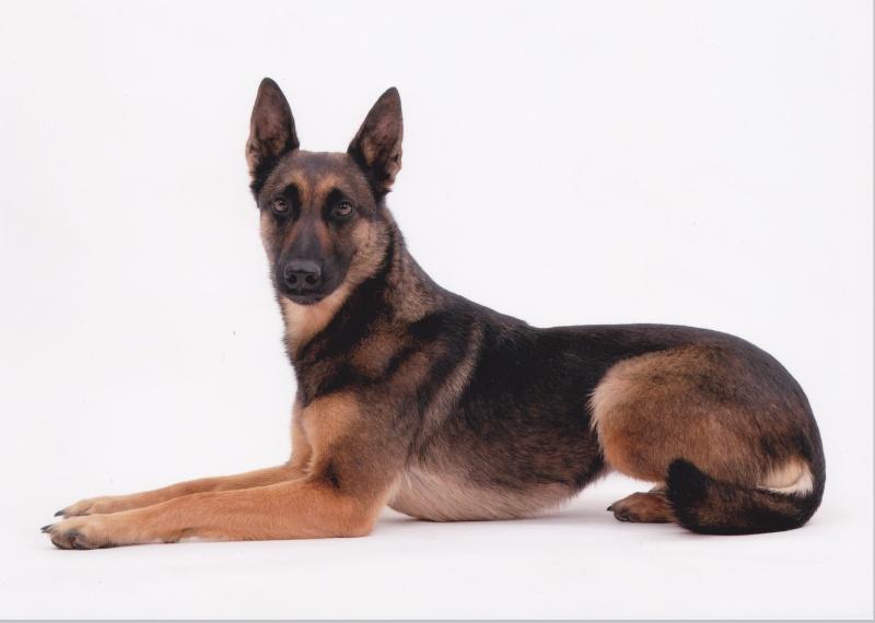 séance photo de ma chienne par un photographe pro, suis-je folle? - Page 3 Img10