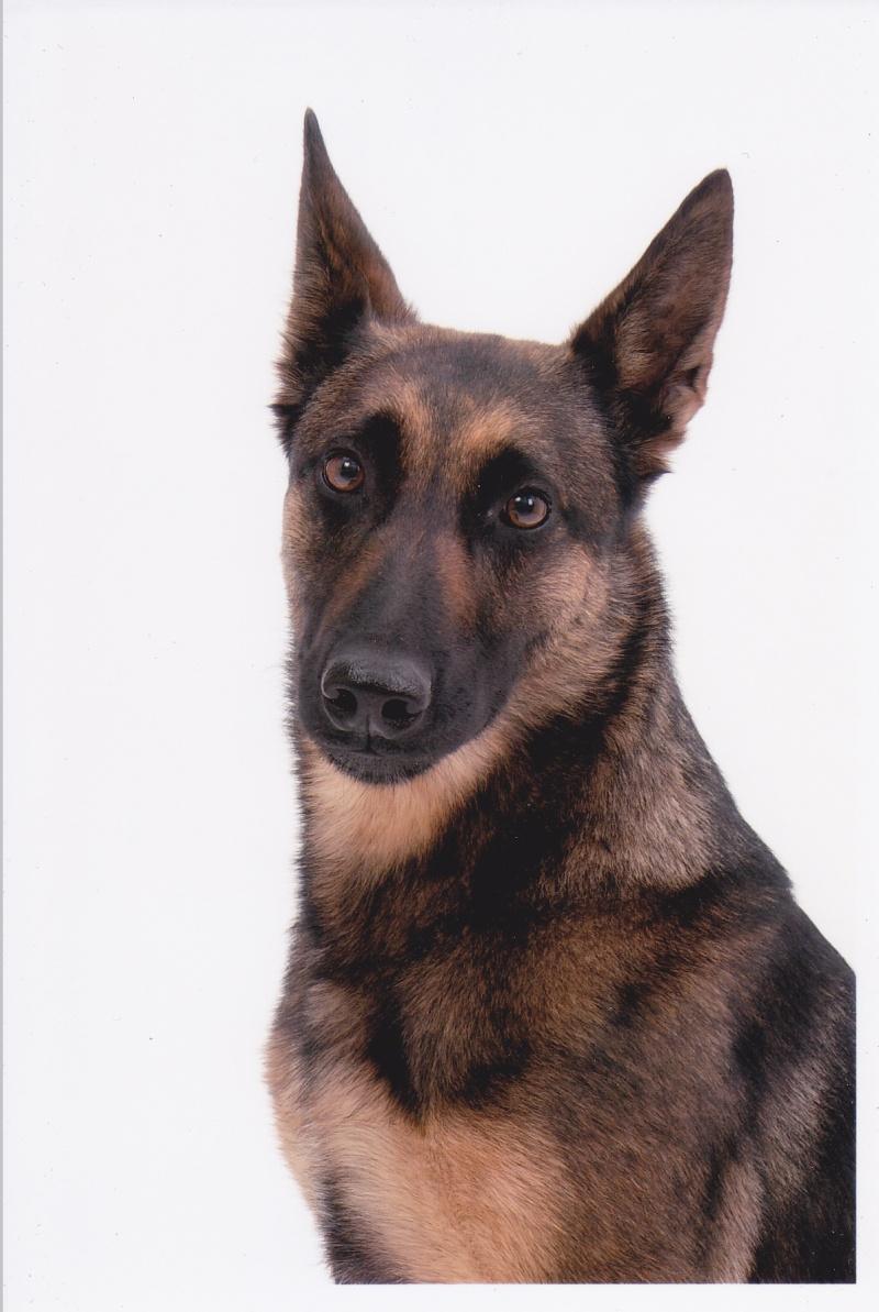 séance photo de ma chienne par un photographe pro, suis-je folle? - Page 3 Img_0011