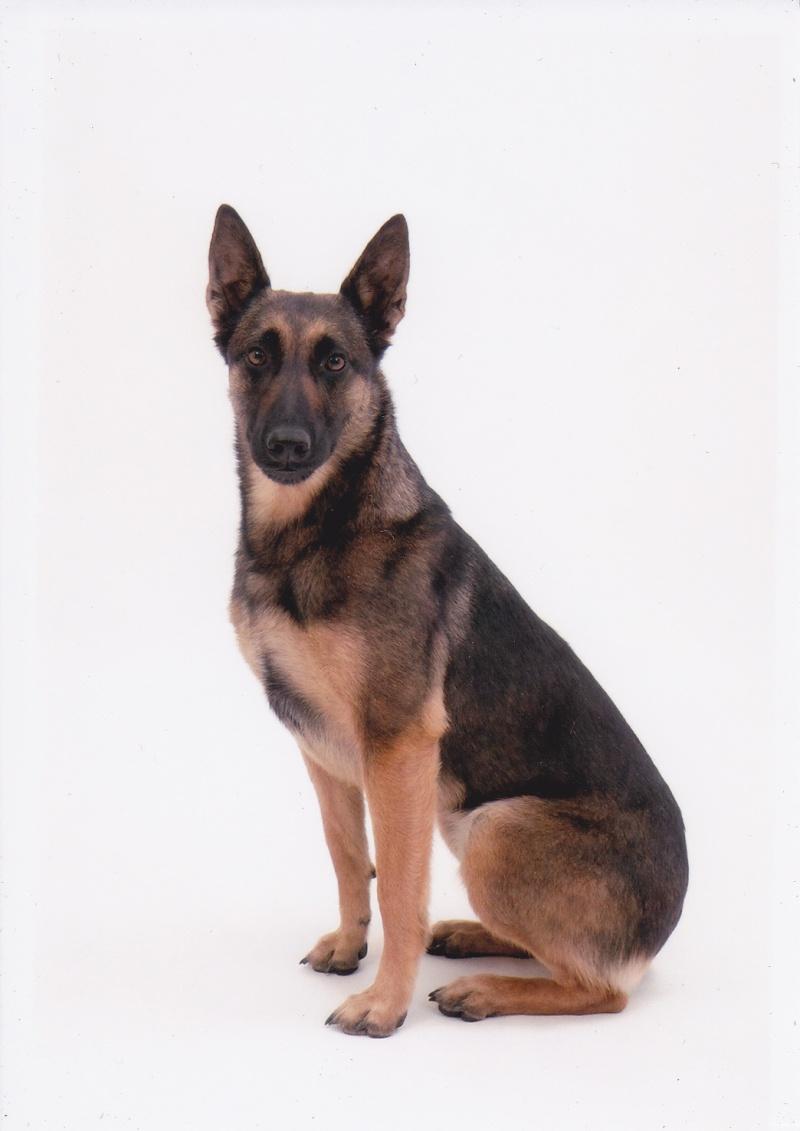 séance photo de ma chienne par un photographe pro, suis-je folle? - Page 3 Img_0012