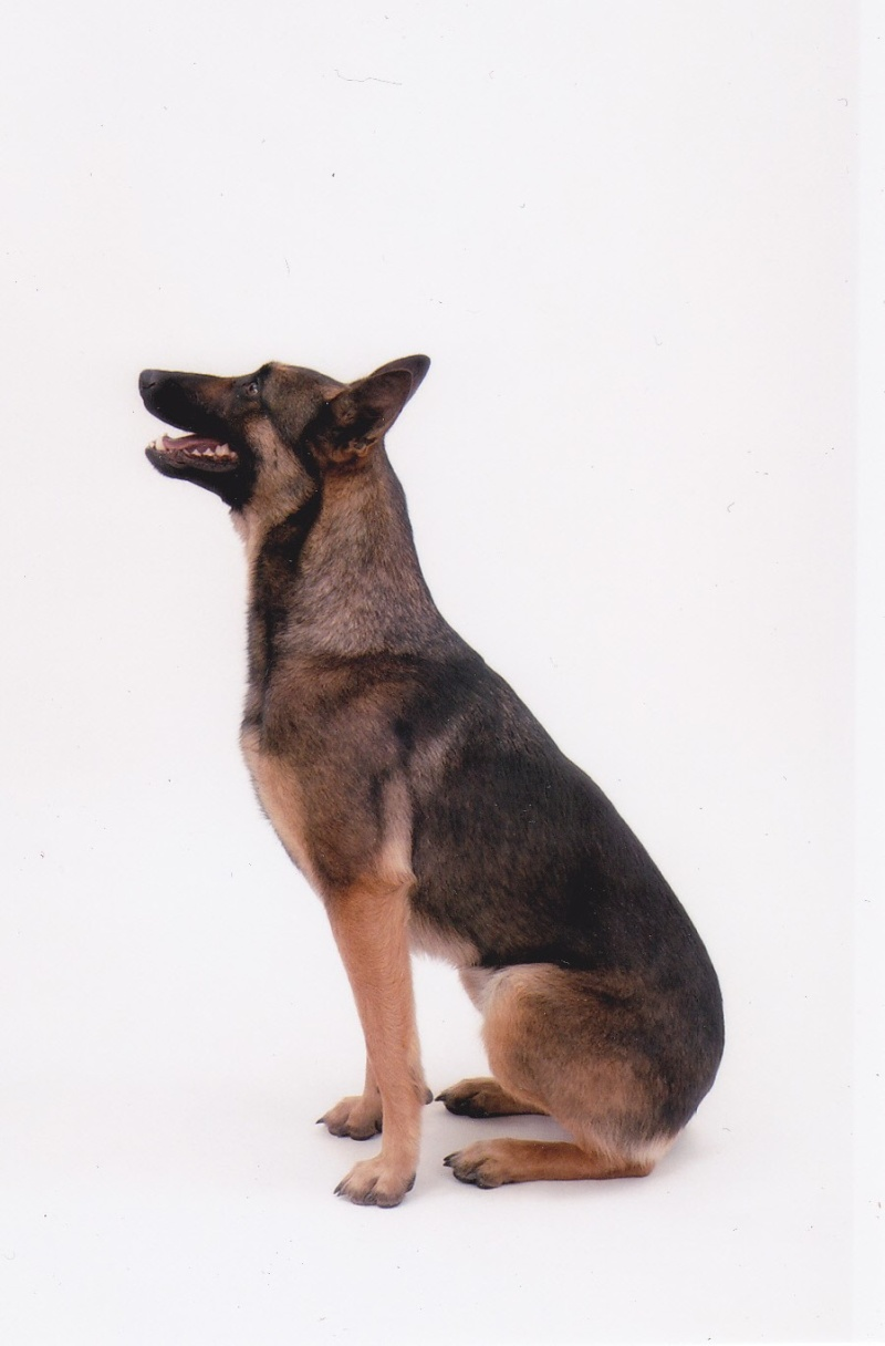 séance photo de ma chienne par un photographe pro, suis-je folle? - Page 3 Img_0013
