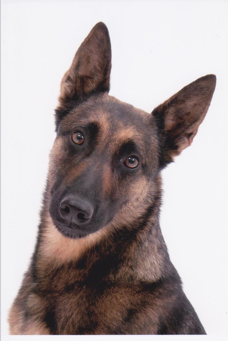 séance photo de ma chienne par un photographe pro, suis-je folle? - Page 3 Img_0014