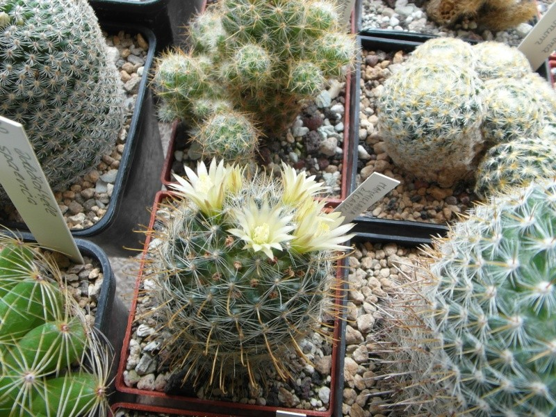 Cacti and Sukkulent in Köln, every day new flowers in the greenhouse Part 64 Bild1002