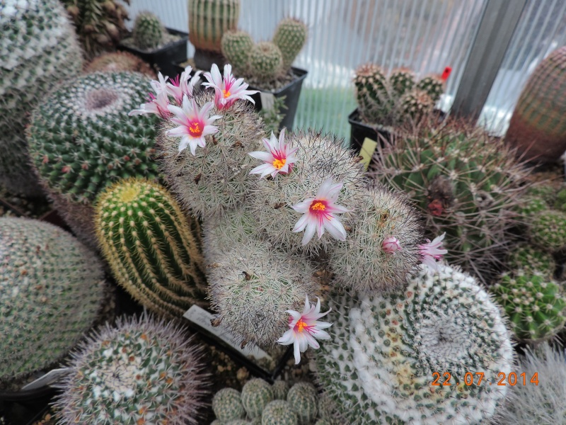 Cacti and Sukkulent in Köln, every day new flowers in the greenhouse Part 110 Bild1045