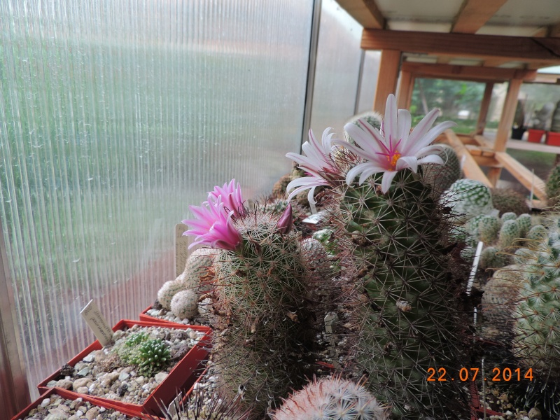 Cacti and Sukkulent in Köln, every day new flowers in the greenhouse Part 110 Bild1046