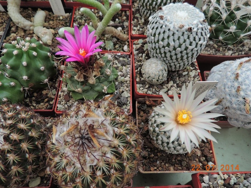Cacti and Sukkulent in Köln, every day new flowers in the greenhouse Part 110 Bild1050