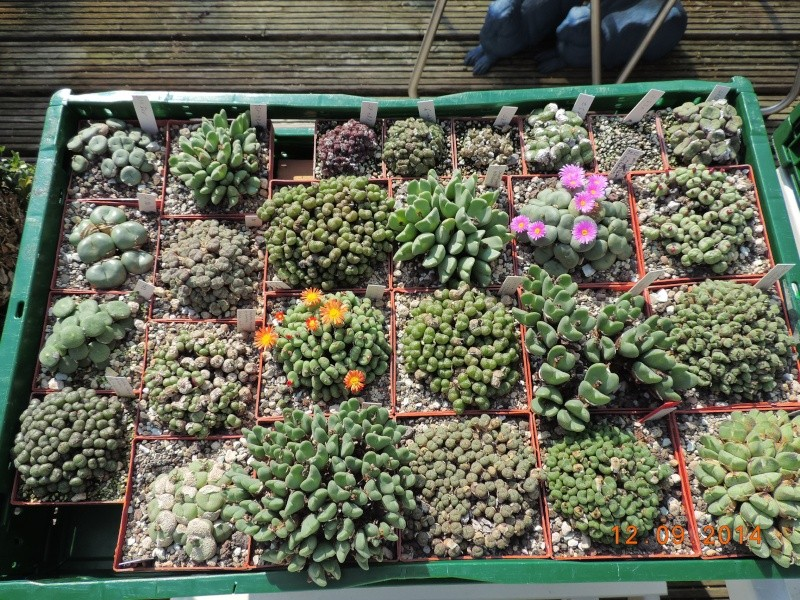 Cacti and Sukkulent in Köln, every day new flowers in the greenhouse Part 110 Bild1091