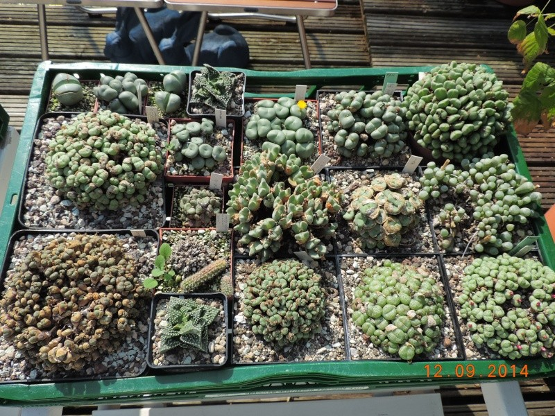 Cacti and Sukkulent in Köln, every day new flowers in the greenhouse Part 110 Bild1092