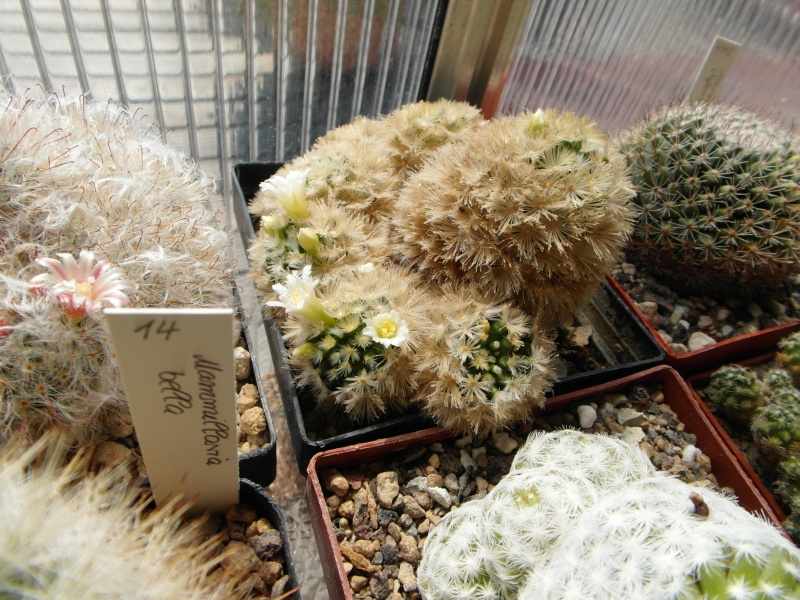 Cacti and Sukkulent in Köln, every day new flowers in the greenhouse Part 59 Bild_182