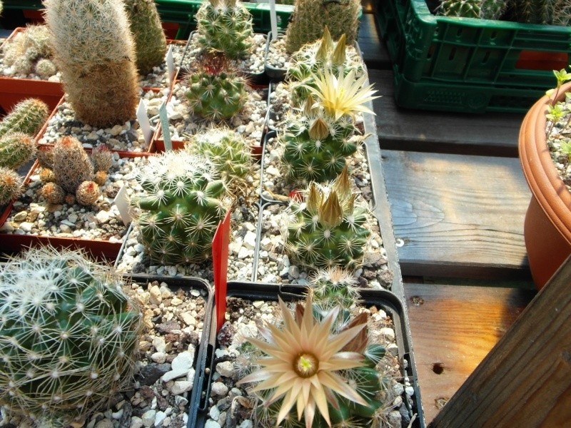 Cacti and Sukkulent in Köln, every day new flowers in the greenhouse Part 59 Bild_190