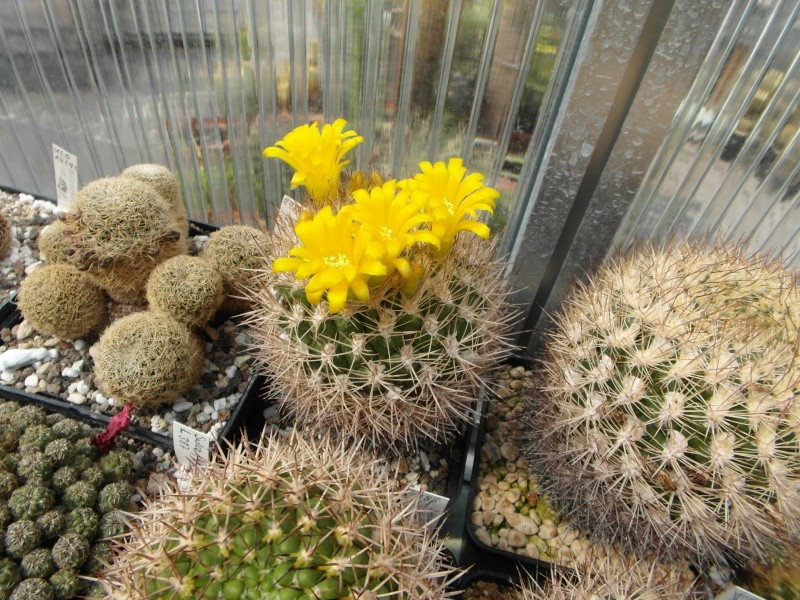 Cacti and Sukkulent in Köln, every day new flowers in the greenhouse Part 59 Bild_228