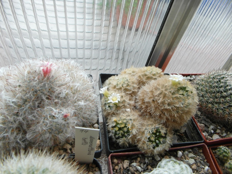 Cacti and Sukkulent in Köln, every day new flowers in the greenhouse Part 60 Bild_360