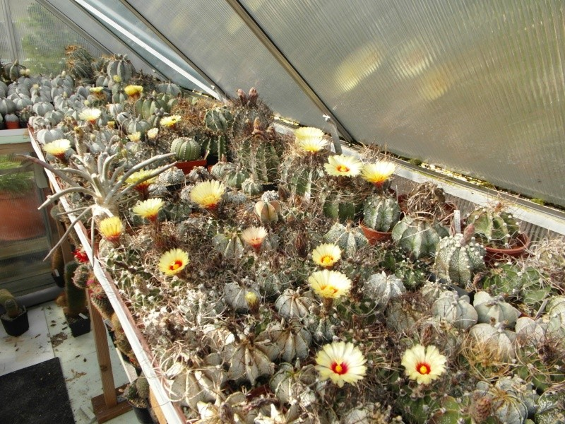 Cacti and Sukkulent in Köln, every day new flowers in the greenhouse Part 61 Bild_467