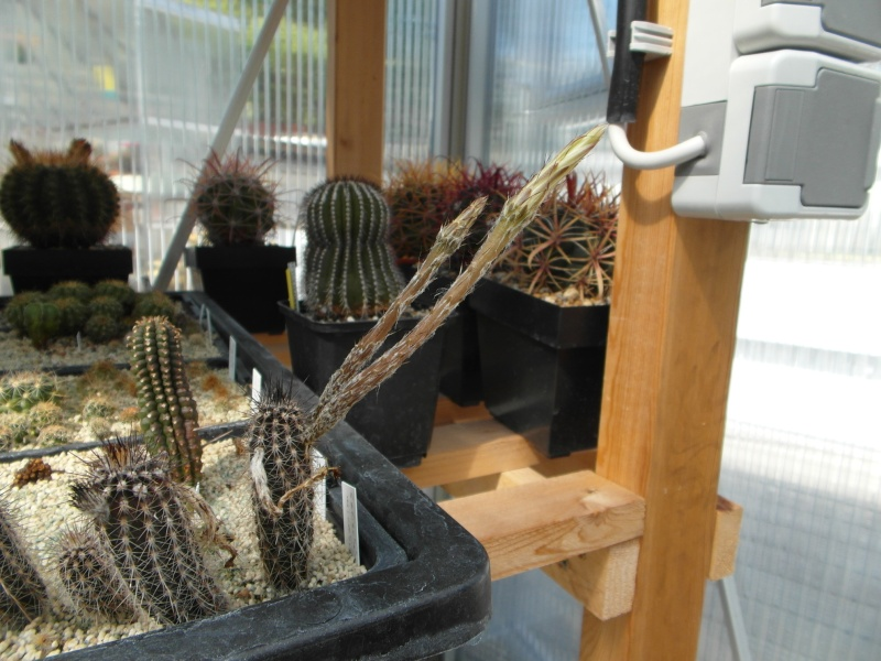 Cacti and Sukkulent in Köln, every day new flowers in the greenhouse Part 58 Bild_569
