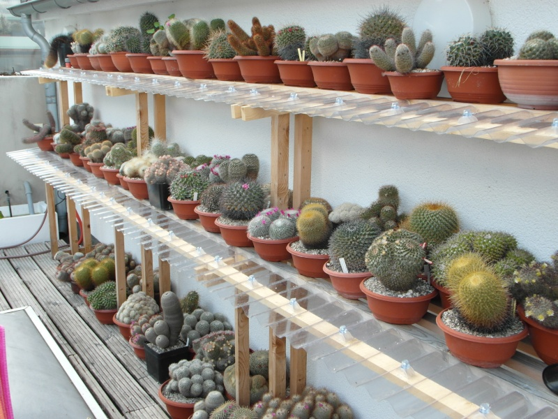 Cacti and Sukkulent in Köln, every day new flowers in the greenhouse Part 58 Bild_597