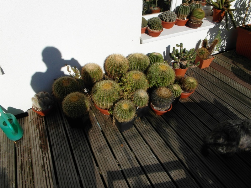 Cacti and Sukkulent in Köln, every day new flowers in the greenhouse Part 61 Bild_695