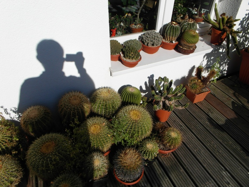 Cacti and Sukkulent in Köln, every day new flowers in the greenhouse Part 61 Bild_697