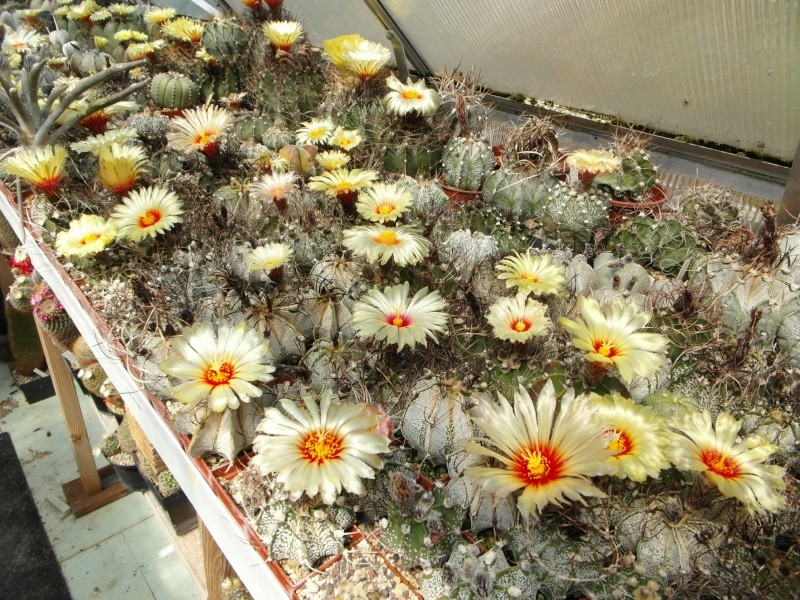 Cacti and Sukkulent in Köln, every day new flowers in the greenhouse Part 62 Bild_709