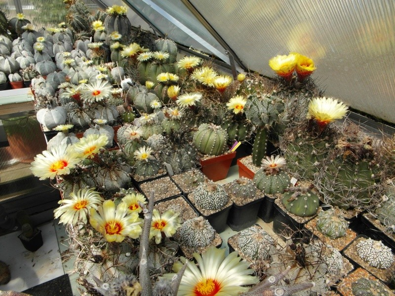 Cacti and Sukkulent in Köln, every day new flowers in the greenhouse Part 62 Bild_714