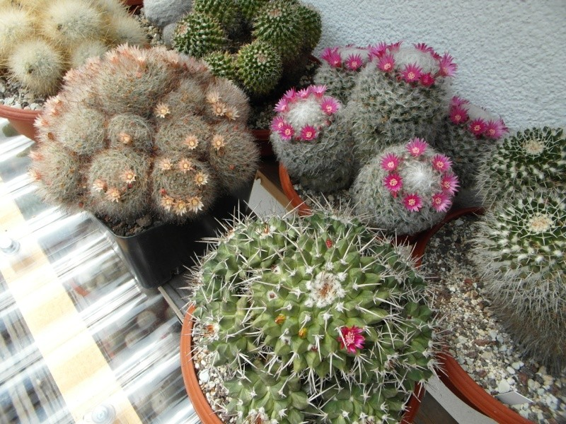 Cacti and Sukkulent in Köln, every day new flowers in the greenhouse Part 62 Bild_728