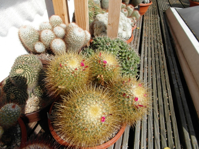 Cacti and Sukkulent in Köln, every day new flowers in the greenhouse Part 63 Bild_828