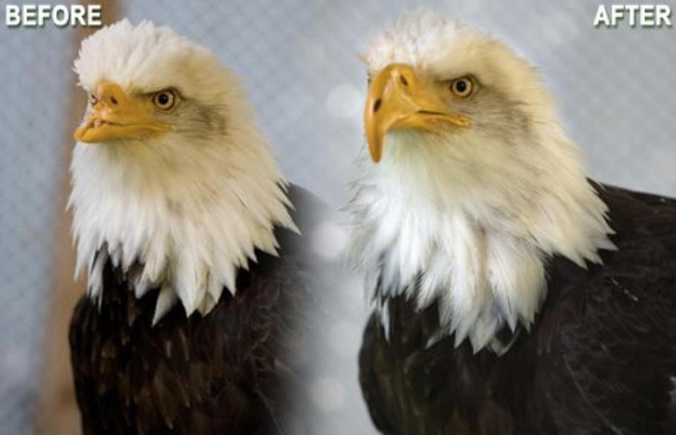 Shqiponja kokbardh dhe sqepi 42295110