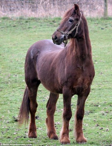 Ngordh kali më i moshuar në botë.. 75510_10