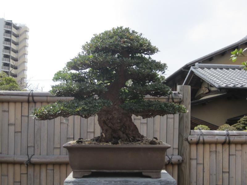 Bonsai Trip To Japan, April 2012 - Page 2 Img_0313