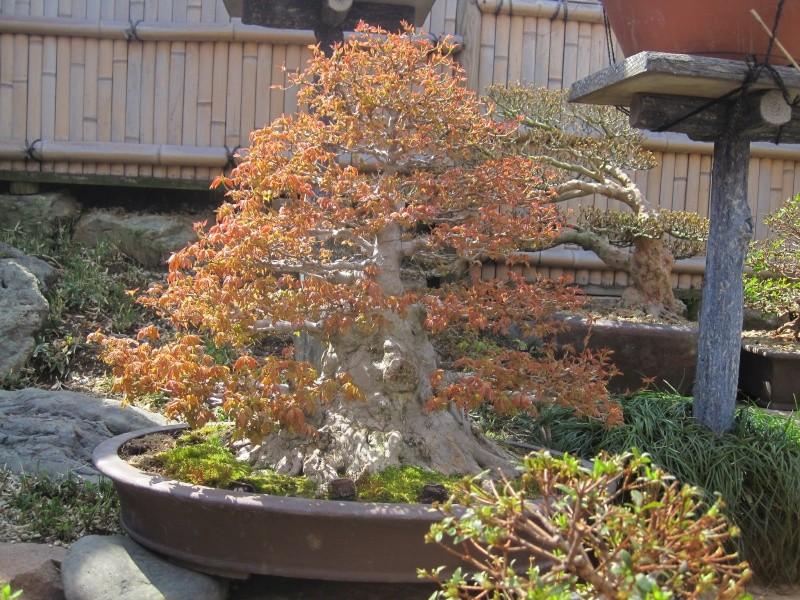 Bonsai Trip To Japan, April 2012 - Page 2 Img_0314