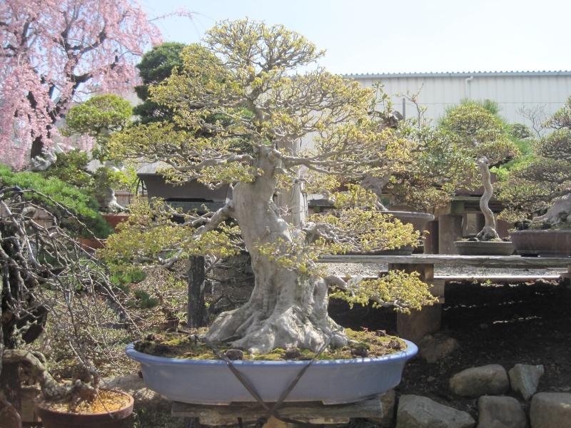 Bonsai Trip To Japan, April 2012 - Page 2 Img_0320