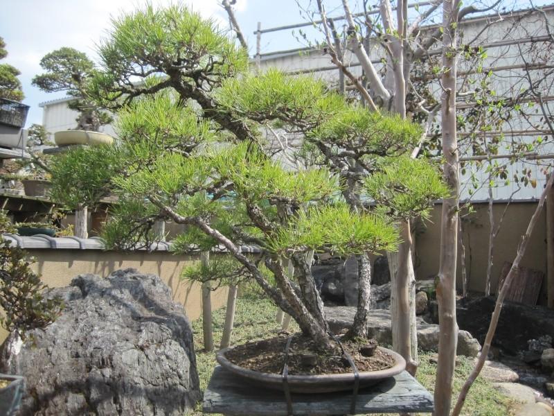 Bonsai Trip To Japan, April 2012 - Page 2 Img_0323