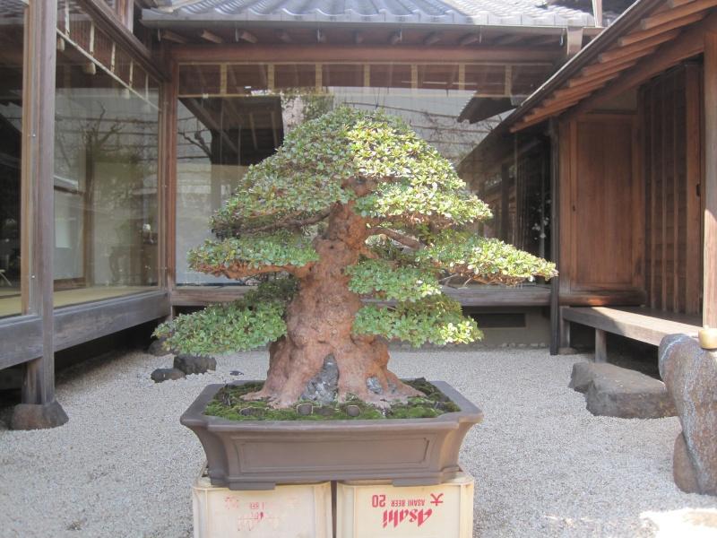 Bonsai Trip To Japan, April 2012 - Page 2 Img_0324