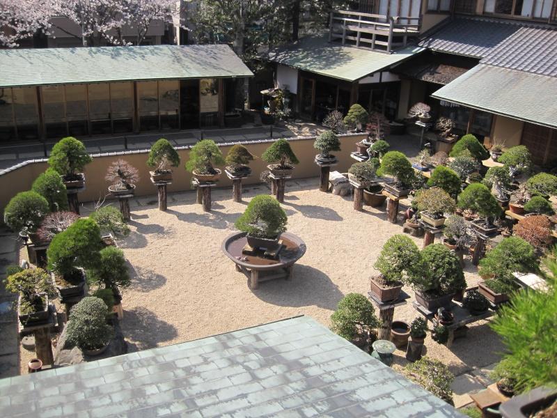 Bonsai Trip To Japan, April 2012 - Page 2 Img_0326