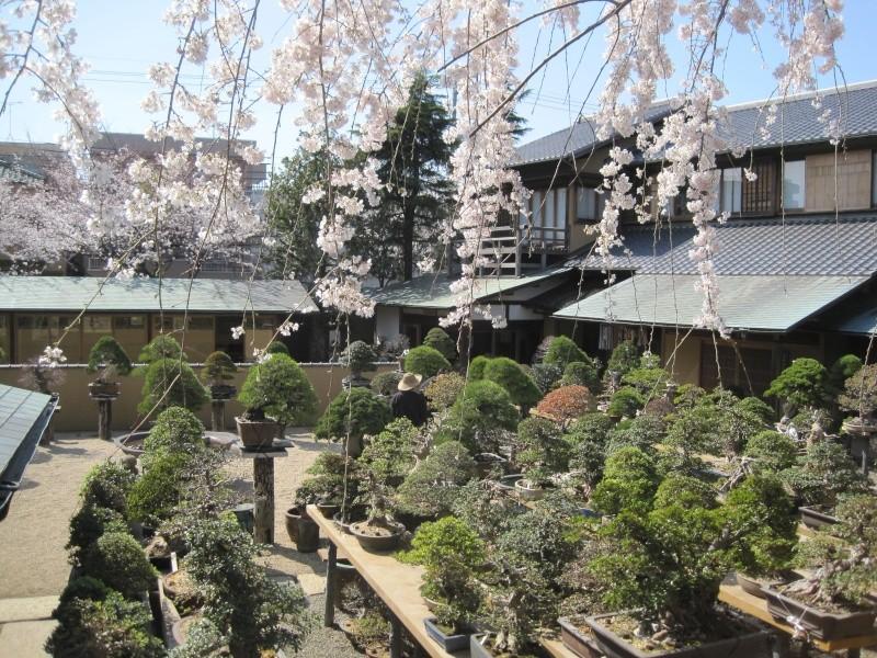Bonsai Trip To Japan, April 2012 - Page 2 Img_0328