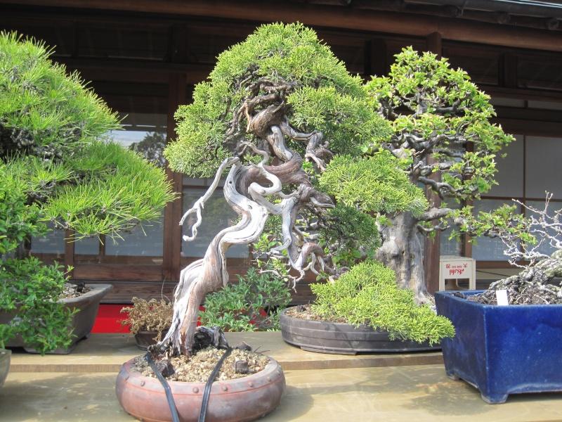 Bonsai Trip To Japan, April 2012 - Page 2 Img_0329