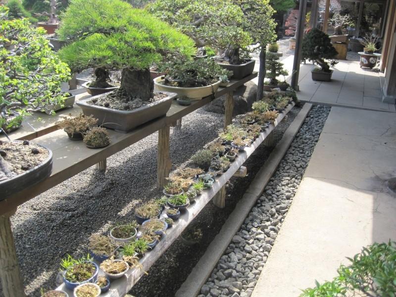 Bonsai Trip To Japan, April 2012 - Page 2 Img_0330