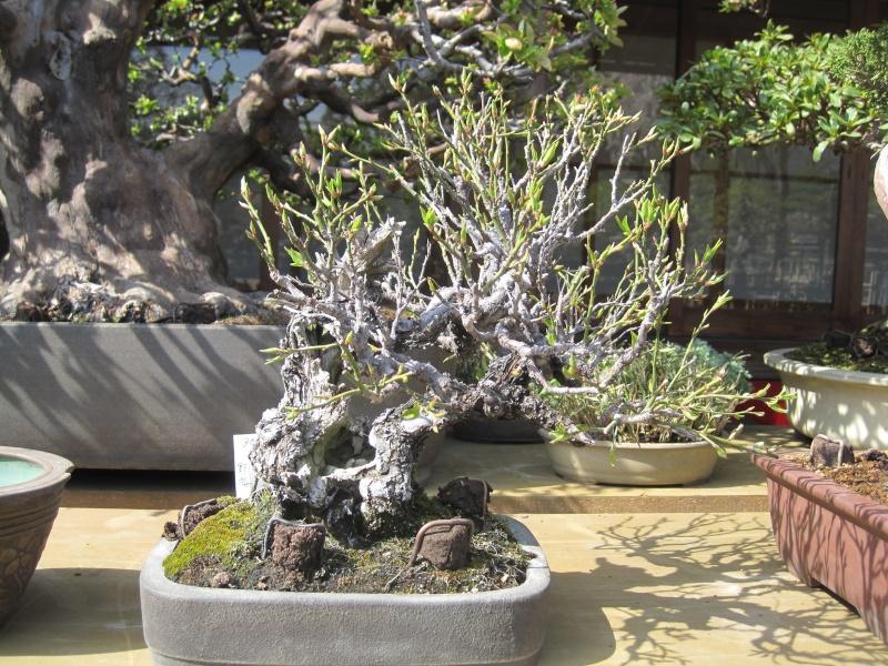 Bonsai Trip To Japan, April 2012 - Page 2 Img_0331