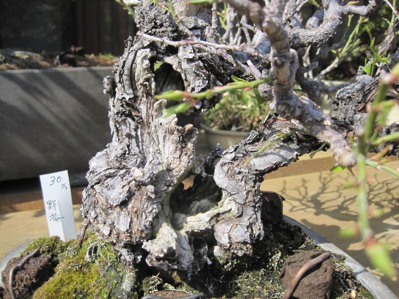 Bonsai Trip To Japan, April 2012 - Page 2 Img_0332