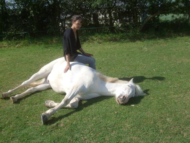 CONCOURS PHOTO : Les chevaux paresseux... 12052910