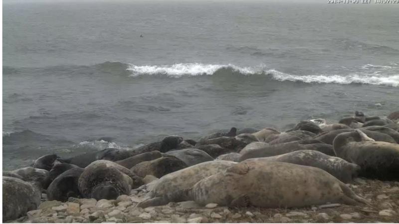 Wildtier-Livecams - Seite 3 Robben10