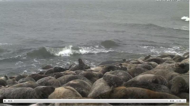 Wildtier-Livecams - Seite 3 Robben11