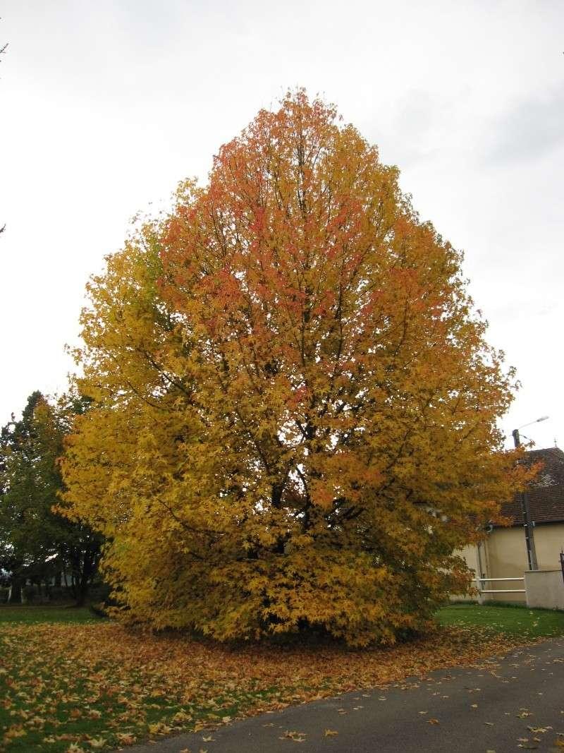 Couleurs d'automne Img_0011