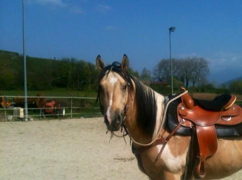 Demi pension, tiers de pension cheval paint horse, Pontcharra / Barraux 10153010