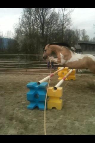 Demi pension, tiers de pension cheval paint horse, Pontcharra / Barraux 10153810