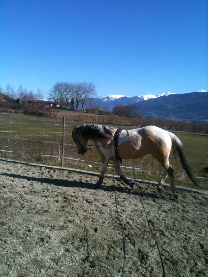 Demi pension, tiers de pension cheval paint horse, Pontcharra / Barraux 17966410