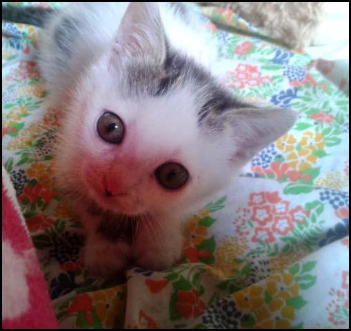Lily petite crevette à l'adoption 2014-110