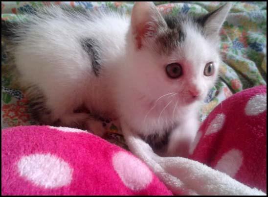 Lily petite crevette à l'adoption 2014-111
