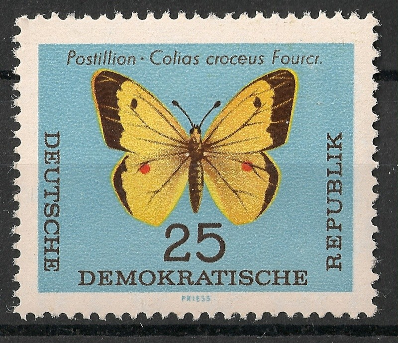Schmetterlinge - Seite 3 Scanne96